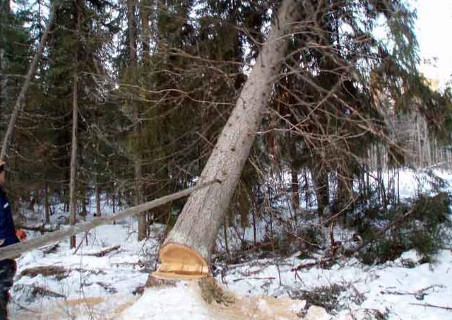заготовка зимней древесины