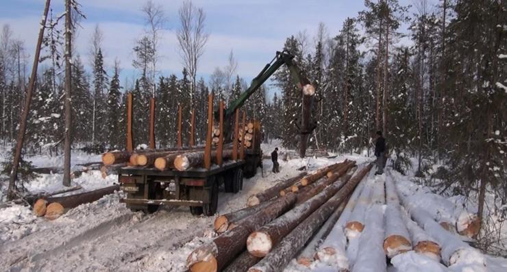 зима - время готовить древесину
